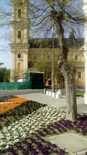 Kalocsa Nagytemplom virágosítás parkgondozás